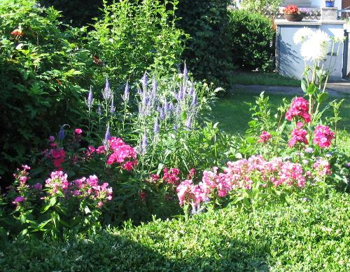 Bunte Blumen als Landeplatz vieler Insekten